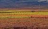 Las Viñas de Gala 🍇🍁🍂 (Explore 236) (pascual 53) Tags: 🍁 🍂 🍇 viñas vinos canon xabi eos1d 70200x2mm paisaje larioja alfaro caseta vegetacion monteyerga
