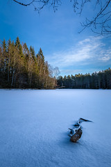 Winter sun on a frozen lake (kaifr) Tags: sunshine trees winter forest outdoors cold lake snow branch frozen oslo norway no