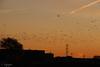 Vuelo dorado.... (cienfuegos84) Tags: aves amanecer dorado