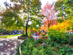 Fall Foliage (brooksbos) Tags: afternoon autumn brooksbos boston bostonma brooks backbay color colour colours colorful foliage fall southend trees flowers city urban nature geotagged garden landscape leaves light massachusetts newengland outdoors people vivid lg g6