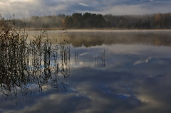 Elements (Stefano Rugolo) Tags: stefanorugolo pentax k5 smcpentaxda1855mmf3556alwr light fog water lake reflection reeds autumn tree sweden hälsingland landscape ripples mist clouds elements serene tranquillity sky sverige