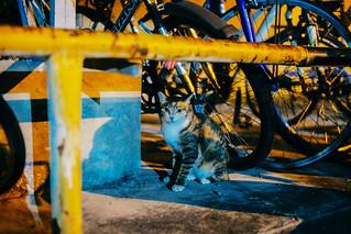 台中-貓的視界