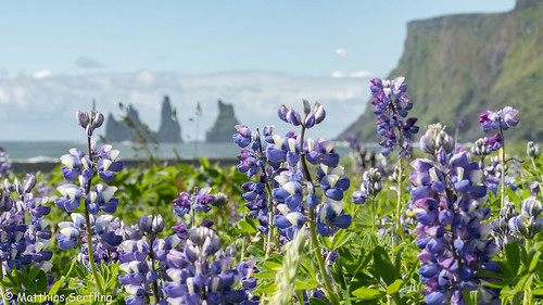 187_Iceland_D502141