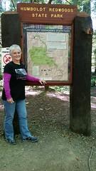 Avenue.of.the.Giants.SusanP (redwoodcoaster) Tags: humboldt redwoods redwood coast national park travel california eurekaca