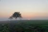 A l'aube d'un nouveau jour (Croc'odile67) Tags: nikon d3300 sigma contemporary 18200dcoshsmc paysage landscape arbres trees levéedesoleil brume mist campagne nature