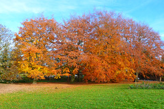 P1270731 (steve p2008) Tags: burtonupontrent autumn november2017 woodland trees