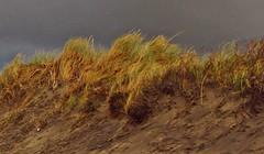 Nørlev Strand (kadege59) Tags: nature danmark seascape wonderfulnature wow canon colours autumn