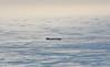 (felix.h) Tags: canoneos400d canon eos 400d eoskissdigitalx digitalrebelxti tokina5013528 tokina50135mm28 capetown capeofgoodhope southernafrica southafrica westerncape atlanticocean atlantic sea ocean seascape water ship blue