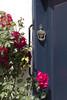 Roses (Ria Rotscheidt) Tags: denmark denemarken ribe old oud vakantie holydays stad kleurrijk colorfull