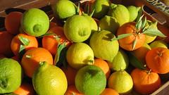 Agrumes (bernard.bonifassi) Tags: bb088 06 alpesmaritimes 2017 novembre nice counteadenissa agrume citron mandarine macro canonsx60 eu