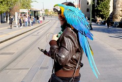 """""""Parrots make great pets. They have more personality than goldfish""""  - Chevvy Chase (VigileVigile) Tags: parrot bird spain zaragoza leatherjacket street candid aragon"""