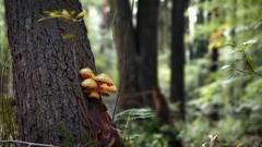 Alder forest (pszcz9) Tags: polska poland przyroda nature natura las forest olcha alder drzewo tree grzyb mushroom dolinabaryczy baryczvalley beautifulearth sony a77 bokeh zbliżenie closeup jesień autumn fall
