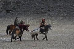 30101789 (wolfgangkaehler) Tags: 2017 asia asian centralasia mongolia mongolian westernmongolia ulgii ölgii bayanulgiiprovince altaimountains altaymountains altaymts goldeneaglefestival people person kazakh competing competition competitor game games horse horseriding horseback horsebackriding horsebackrider traditionalgame kukhbar fighting goatskin kokpar