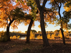 bench in the bosque 25Oct17 (johngpt) Tags: trees alameda cottonwoods places appleiphone7plus autumn bosque bench albuquerque newmexico unitedstates us benchmonday hmm