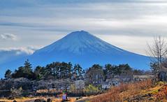 Mt. Fuji (にく) Tags: japan kawaguchilake kawaguchiko mtfuji fujisan mountfuji yamanashiken yamanashi mountain landscape autumn volcano oikepark 日本 河口湖 富士山 山梨県 山 秋 大池公園