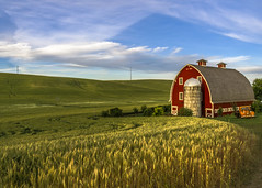 Morning in the Breadbasket (keith_shuley) Tags: red barn grain crops palouse dawn colfax washington