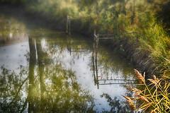 Ora la nebbia  innalza dietro a noi tacitamente  una soglia già tesa ad aspettarci #Explore# (Gianni Armano) Tags: ora la nebbia innalza dietro noi tacitamente una soglia già tesa ad aspettarci laghetto foto gianni armano photo flickr