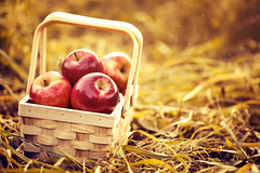 Fresh Tasty Red Apples in Wooden Basket on Red Autumn Background (kutetan89) Tags: basket apple red fruit fresh food healthy organic autumn harvest nature green garden ripe summer natural juicy orchard agriculture leaf season background health delicious freshness farm fall plant closeup grass color wooden sweet bio gardening vegetarian crop diet countryside farming outdoors wood vegetable colorful day tone horizontal pick