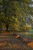 ... autumn ... (jane64pics) Tags: autumn autumncolours autumnleaves trees tree beech beechtrees fence fencing leaves sunlight spotlight nature naturallight naturalbeauty janefriel janefriel2017 greystonescameraclub gcc powerscourt enniskerry wicklow cowicklow colour colours
