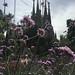 Sagrada Familia through blossoms