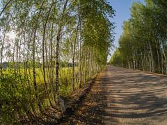 Summer bike ride (tranqvilizator) Tags: summer sunny tree road bike samyang olympusomdem10markii olympus fisheye sky grass wood