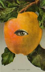 Apple of My Eye (dadadreams (Michelle Lanter)) Tags: fruit fruity appleofmyeye yellowapple collageart belleflowerapple
