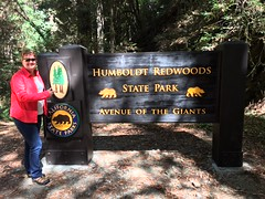 Avenue.of.theGiants.DebK (redwoodcoaster) Tags: humboldt redwoods redwood coast national park travel california eurekaca