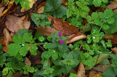 Autumn survivors (Baubec Izzet) Tags: baubecizzet pentax flower nature autumn leaves