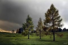 IMG_4665.Les mélèzes (rolanddumontgirard) Tags: arbres automne campagne jura golf lesrousses rolanddumontgirard mélèze