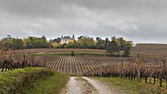 _MG_4263 (jacques vallet) Tags: sauterne vin yquem chateaux