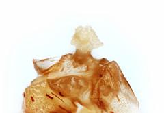Tiny floating flowers: Vallisneria neotropicalis (Hydrocharitaceae) (Macroscopic Solutions) Tags: tiny floating flowers vallisneria neotropicalis hydrocharitaceae macropod macroscopic solutions micro macro pollen sacs taxonomy:kingdom=plantae plantae taxonomy:subkingdom=tracheophyta tracheophyta taxonomy:phylum=magnoliophyta magnoliophyta taxonomy:class=liliopsida liliopsida taxonomy:order=alismatales alismatales taxonomy:family=hydrocharitaceae taxonomy:genus=vallisneria