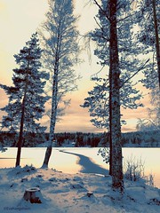 Am I dreaming or is this actually Winter Wonderland? (evakongshavn) Tags: landscapephotography frozenlake landscape landschaft lake water lakes waterscape snow snowy snowtree snowcrystal ice winter winterwonderland forest wald bois arbre fineart fineartphotography beautyinnature norsknatur natur nature naturbilder naturescape naturelover earthnaturelife naturephotography naturelovers fantasticnature naturaleza naturescenes serenity serene travelawsome travelplanet tranquilglow tranquility tranquil naturphotography beautifulearth heavenonearth earthswonder earthy light yellowlight yellow outsidepictures pink outdoorphotography photoshoot photooftoday photooftheday unlimitedphotos