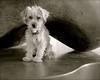 Cutie (suenosdeuomi) Tags: sumo allanhouser sculpture dog cutie monochrome