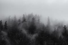 Foggy forest Squamish --3 (tristanrayner.com) Tags: green blackandwhite bw fog mist fall autumn winter seasons rain clouds pnw bc british columbia squamish