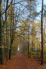 Ugchelse Herfst (doevos) Tags: bomen bos ugchelsebos veluwe woud ugchelen gelderland netherlands