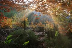 Enchanting forest (Frank ) Tags: belgië belgium autumn fall weather sun sunray sunbeam girl women trees forest shrubs canon sony nikon solwayter solwaster topf25 topf100 topf150 topf200 topf250 nature blog bikini fblog oxon passionphotography yourbestoftoday