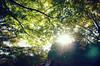 _Y030145 (YusiYi) Tags: 高尾山 flicker pics japan photo photographylovers colorusphoto colorful 日常 今日 生活 景色 日常風景 love 道 street outdoor tree plants sky blue yellow cloud 光 light