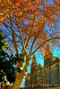 Otoño patrimonial (Guervós) Tags: otoño autumn fall automne herbst فصلالخريف tardor 秋 aŭtuno udazken outono φθινόπωρο पतझड़ herfst autunno jesień toamnă осень sonbahar hoja folha feuille leaves úbeda jaén andalucía andalusia españa spain espagne spanien spagna 西班牙 espanya स्पेन ہسپانیہ espania espanha amarillo yellow giallo amarelho jaune gelb 黄色 basílica colegiata santamaría realesalcázares patrimoniodelahumanidad worldheritage patrimonidelahumanitat welterbe patrimoniodellumanità patrimóniomundial gizateriarenondarea patrimoniodahumanidade 世界遗产 plátano platanushispanica castaño paseo