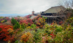 Kiyomizu-dera Temple in Kyoto, Japan (phuong.sg@gmail.com) Tags: ancient architecture autumn blooming blossoms buddhist building cherry city culture day dera dusk evening famous foliage garden heritage historic historical japan japanese kansai kiyomizu kiyomizudera kyoto landmark landscape leaves nature old pagoda religion religious sakura season shinto shrine site temple travel tree wood world