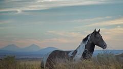 Wild Horse Mountains at Dusk 4023 C (jim.choate59) Tags: horse wildhorse mountains dusk jchoate warmspringsreservation oregon landscape sunset d610 littledoglaughedstories on1pics