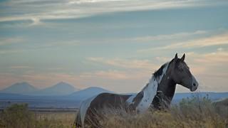 Wild Horse Mountains at Dusk 4023 C