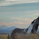 Wild Horse Mountains at Dusk 4023 C thumbnail