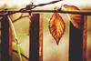 Nature 2017 (nemanjas.rs) Tags: nemanjas nemanjasrs nemanjaness leaf nature outdoor morning autumn plant grape herb alone silence yellow green fall
