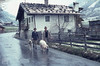 Pig & alsatian on road. Rauris in rain (Mary Gillham Archive Project) Tags: 1965 52212 agriculture april1965 austria mammal people pig rauris dog