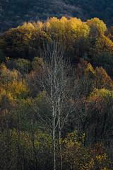 Tree one (Ivan Vranić hvranic) Tags: tree trees light autumn sunset croatia braslovje