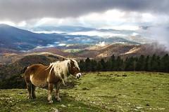Urkiolamenditik Otxandio begibistan (Jabi Artaraz) Tags: jabiartaraz jartaraz zb euskoflickr horse yegua caballo nature urkiolamendi urkiola otxandio oleta naturesfinest natureselegantshots