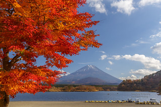 富士秋色 Autumn colors with Mt.Fuji _MG_3985