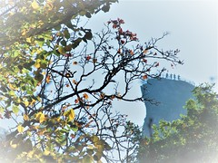 ship over the forest (♦ Peter & Ute Grahlmann ♦) Tags: leaves germany