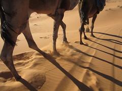 Desert in Morocco (Mountain and travel) Tags: morocco marruecos maroc desierto desert sahara merzouga