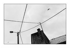 Lorient, zone portuaire (Punkrocker*) Tags: nikon f2 sb nikkor 35mm 352 préai film ilford pan 400 nb bwfp harbor boat birds lorient keroman morbihan bretagne brittany france